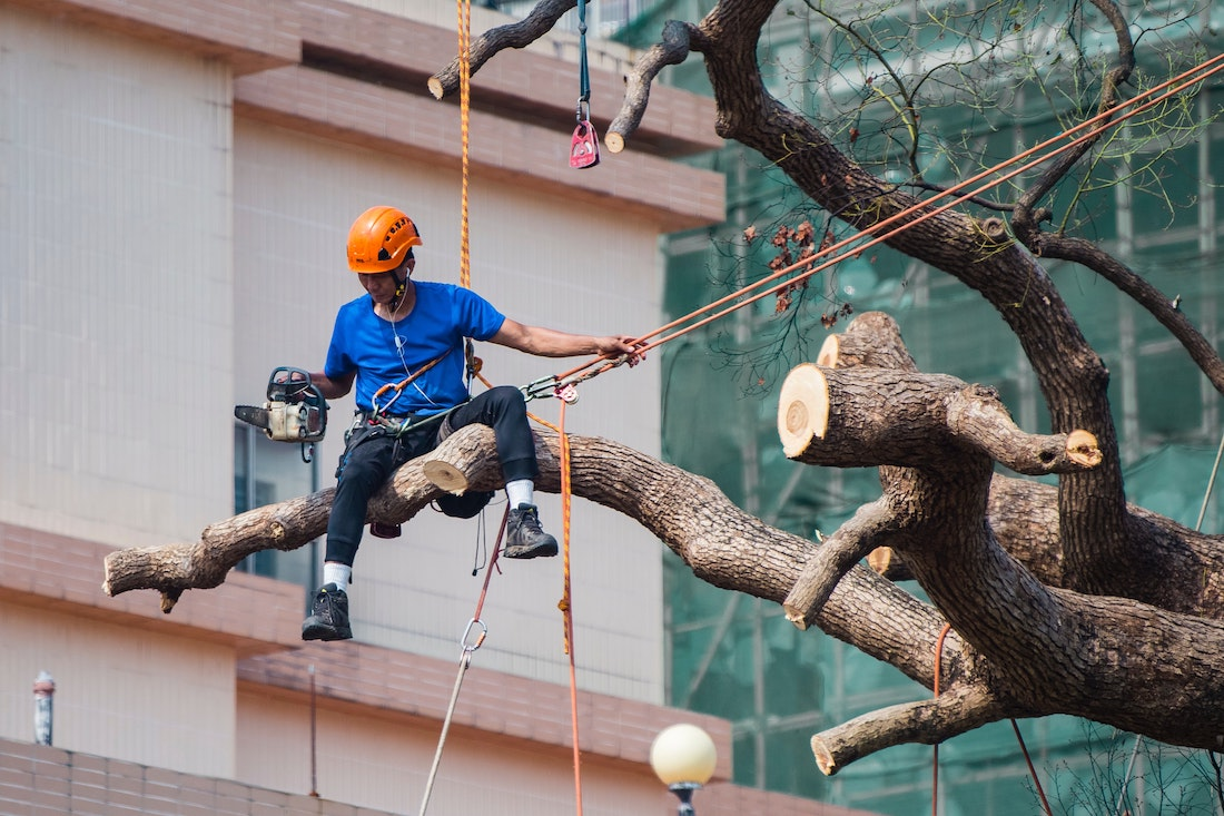 tree removal near me cost
