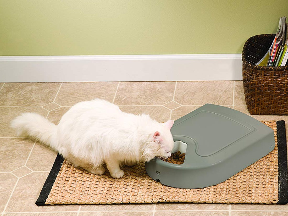 automatic cat feeder walmart