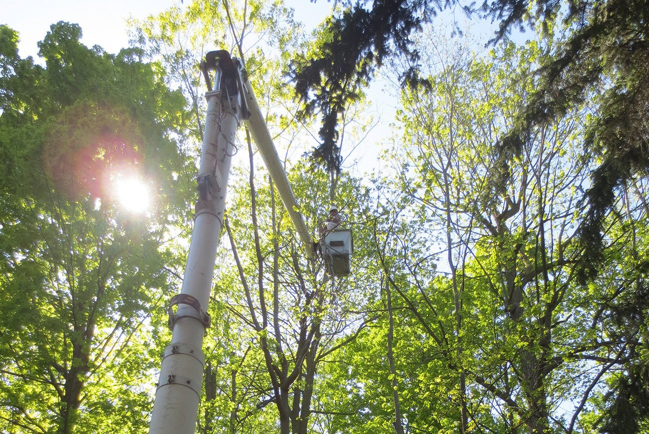 tree service youngstown ohio